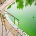 What to do About Algae in Your Pool